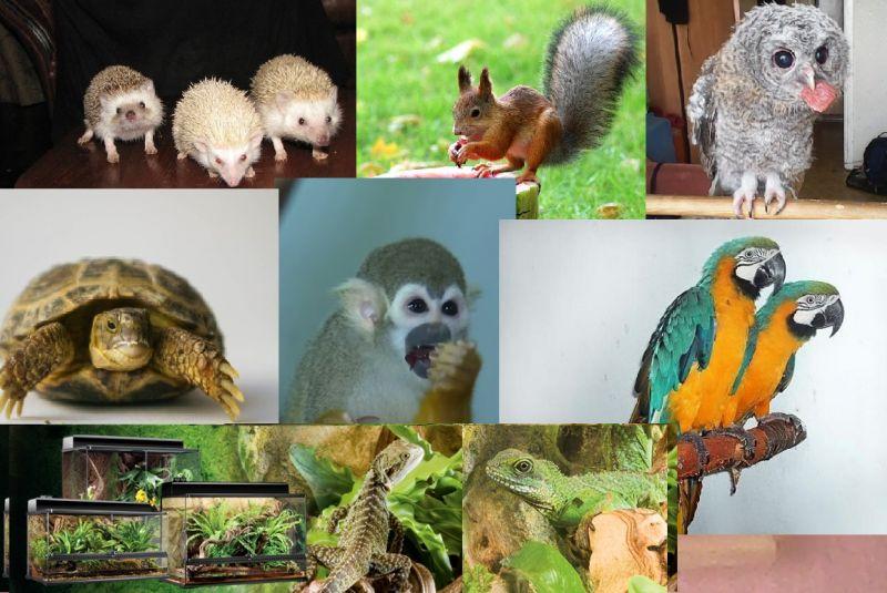 Питомник экзотических животных и птиц