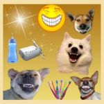 Чистка зубов у собак ультразвуком без наркоза