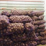 Картофель продовольственный, оптом и в розницу.