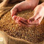 ООО Медея оптовая продажа зерна и кормов