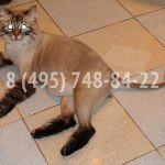 Стрижка кота и кошки, у вас дома, без нapкоза.