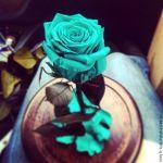 Проснись, скоро праздники! Порадуй свою любимую с помощью розы в колбе, которая будет у тебя уже