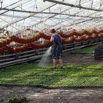 Рабочие тепличного хозяйства